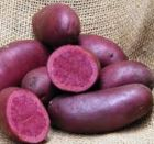 RED EMMALIE Seed Potatoes